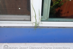 Grass growing from a window