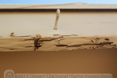 You know you have moisture issues when there are mushrooms growing out of the fascia